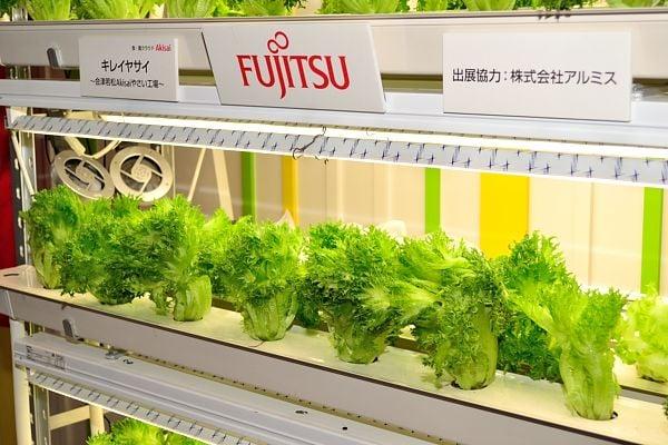 racks of Fujistu lettuce