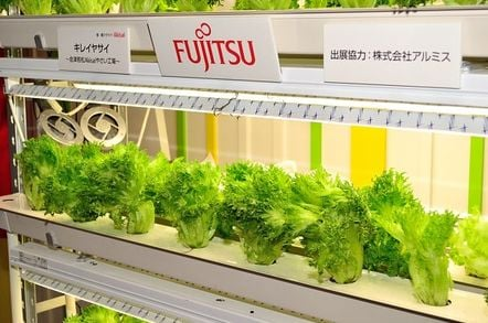 racks of Fujistu lettuce