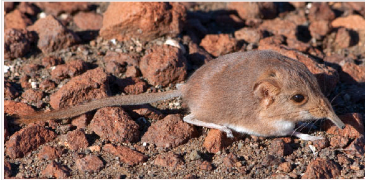 Photo of the mouse