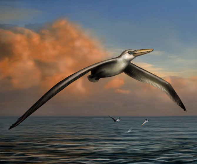 Artist's impression of world's largest flying bird, Pelagornis sandersi