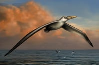 Artist's impression of world's largest flying bird, <i>Pelagornis sandersi</i>