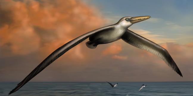 Artist's impression of world's largest flying bird, <i>Pelagornis sandersi</i>