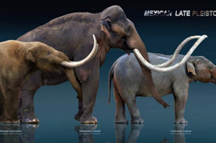 From left to right: Mastodon, mammoth, gomphothere. Credit: Sergio de la Rosa