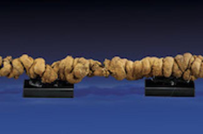 Enormous coprolite