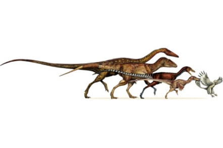 From left to right are: the ancestral neotheropod (~220 Million years old), the ancestral tetanuran (~200 myo), the ancestral coelurosaur (~175 myo), the ancestral paravian (~165 myo), and Archaeopteryx (150 myo).