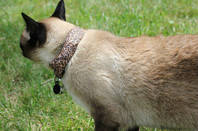 Coco with WarKitteh collar