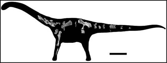 Rukwatitan bisepultus skeleton