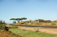 Beautiful landscape picture of Kenya, with a man cycling past an acacia tree against a yellow sandy background