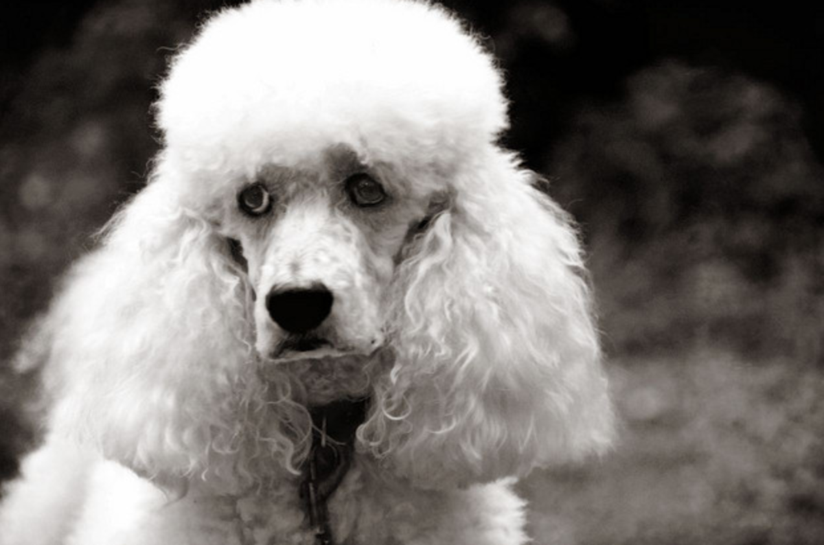 Google Heads Out The Back With Rifle Puts Down Poodle