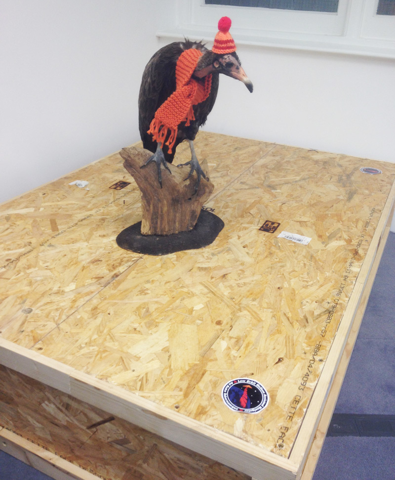 Reg the vulture guards the aircraft's packing case