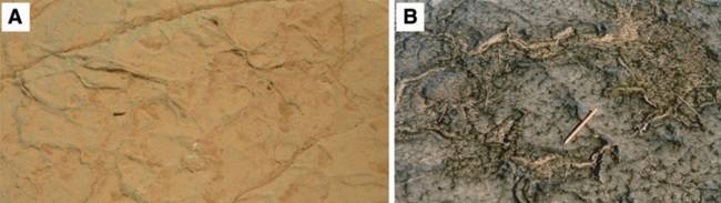 Comparison of fossil strata on Earth and Mars