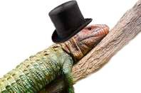 LIZARD WEARING A TOP HAT SITS ON A BRANCH.  Brett Weinstein pic - ALTERED BY JUDE KARABUS - licensed under  CC 3.0