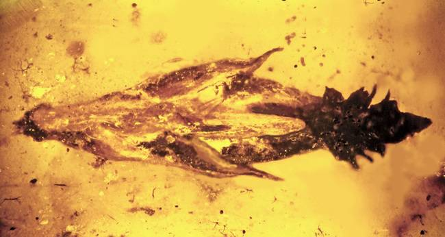 Ancient amber encasing early grass