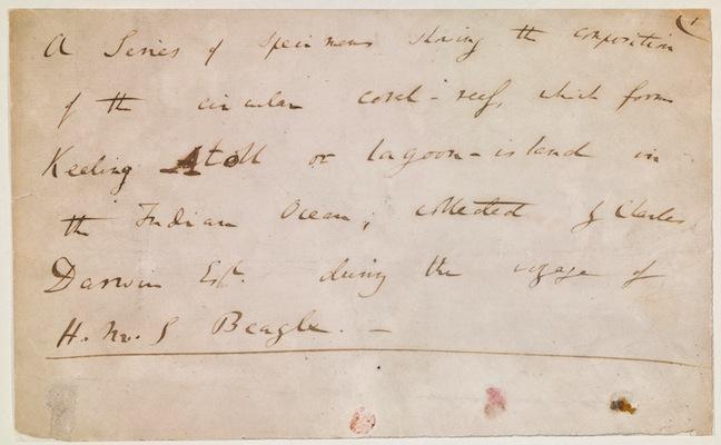 Darwin Coral Notes