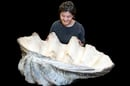 NHM Giant Clam