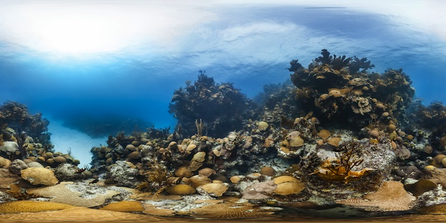 NHM Hourglass Reef Bermuda