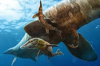 Mosasaurs illustration. Image credit: Julius T Csotonyi for the University of Yale