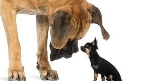 big dog little dog, image Shutterstock
