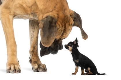 big dog little dog, image Shutterstock