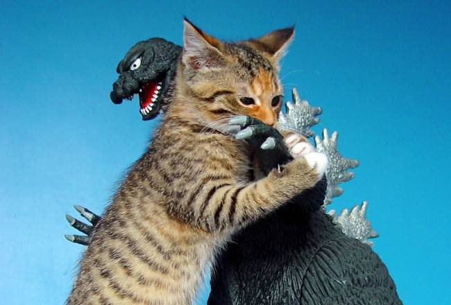 Godzilla vs Kitten by https://