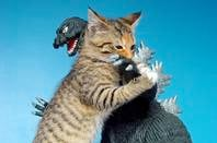 Godzilla vs Kitten by https://www.flickr.com/photos/fun9us/