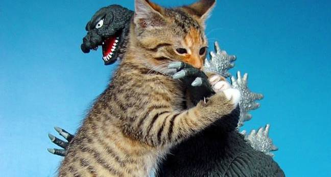 Godzilla vs Kitten by https://www.flickr.com/photos/fun9us/