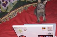 Hacker kitten