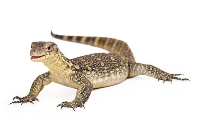 Iran: We have defeated evil nuclear-sensing Western lizards! • The
