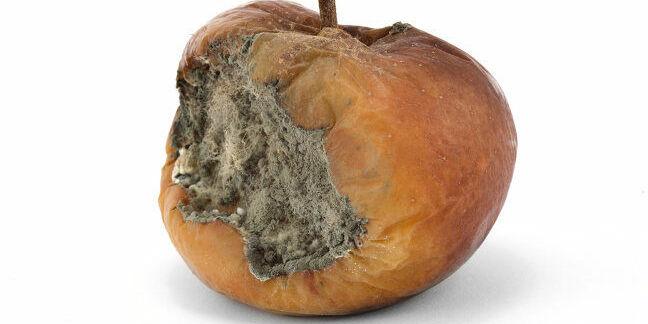 Rotten apple. Pic: Shutterstock (http://www.shutterstock.com/pic-29447929/stock-photo-a-rotten-apple-on-a-white-background.html)