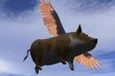 flying_pig_648