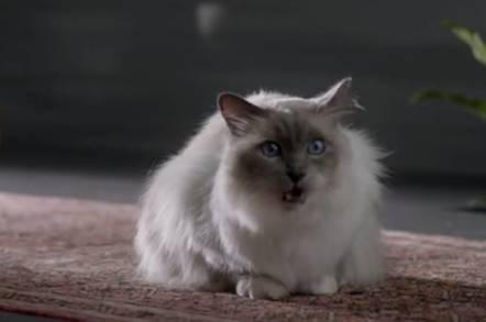 Cat from Cisco TV ad