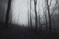 Misty woods picture via Shutterstock