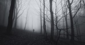 Misty woods picture via Shutterstock