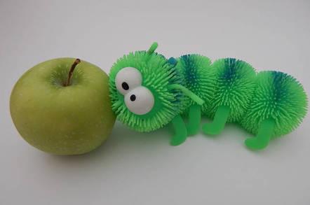 Bug eating an apple
