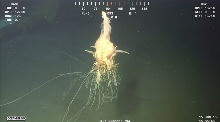 Thumbnail for Flying Spaghetti Monster spotted off Angolan coast