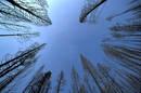 Clear_blue_Sky