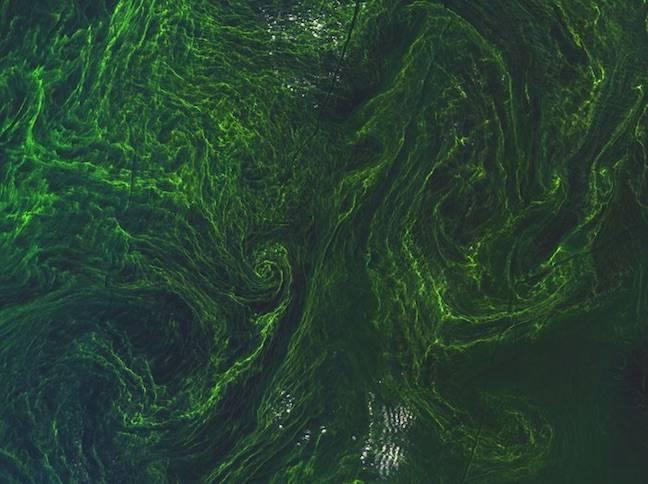 Baltic Sea algal bloom by ESA Sentinel-2