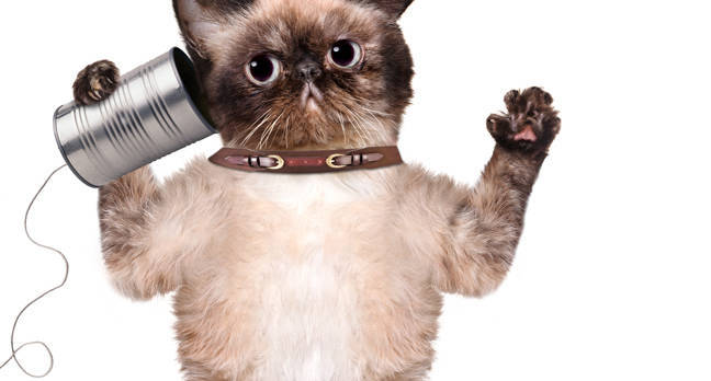 shutterstock_192561857-cat-
