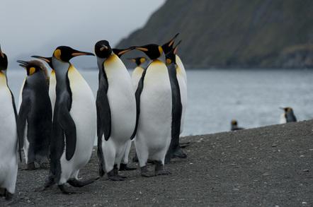 Penguins, image via Shuttertock