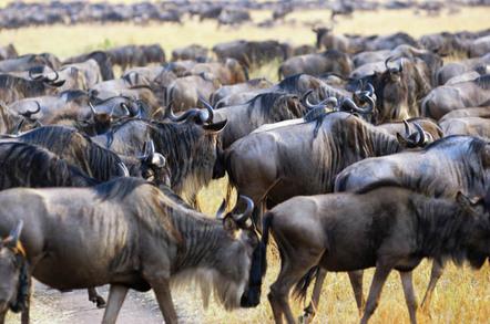 Herd photo via Shutterstock