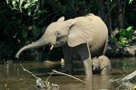 Elephant_and_calf