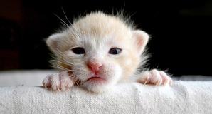 Kitten, image via Shutterstock