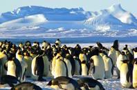 penguins in antarctica