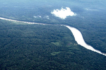 Amazonian_rainforest