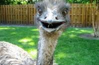 Emu by Kelly Sikkema on Flickr