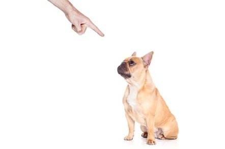 """Bad dog"": Owner wags finger at naughty bulldog"