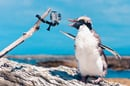 Penguin with video photo via Shutterstock