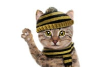 A cute cat in a jumper waves goodbye.... Pic via Shutterstock