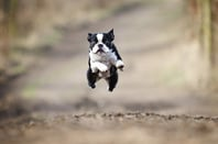 Dog jumping, image via Shutterstock