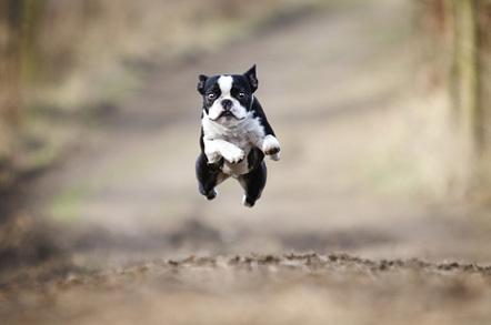 Dog jumping, image via Shutterstock